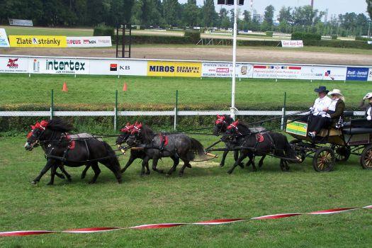 Šestispřeží pony