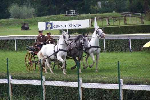Ruská trojka starokladrubských koní