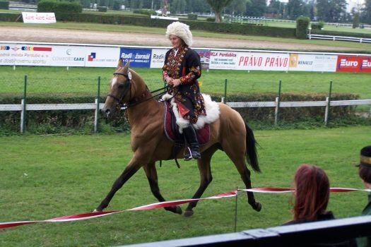 Achaltekynský kůň