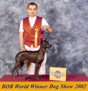 Světový vítěz 2002 Falcon Taschi - Rimpo