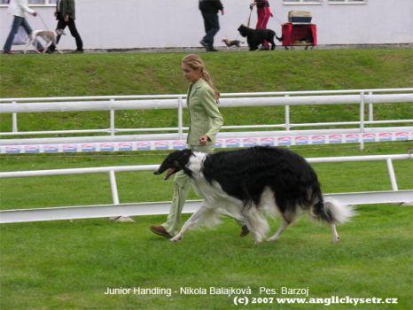 Výměna psů v junior handlingu